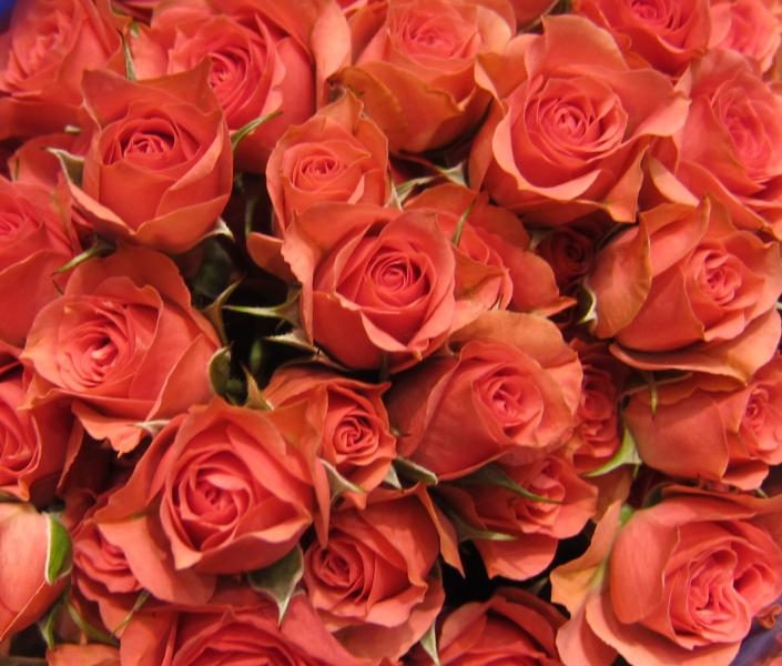 Coral roses wedding flowers gallery - Rosas color coral ...